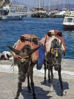 Donkeys_Hydra