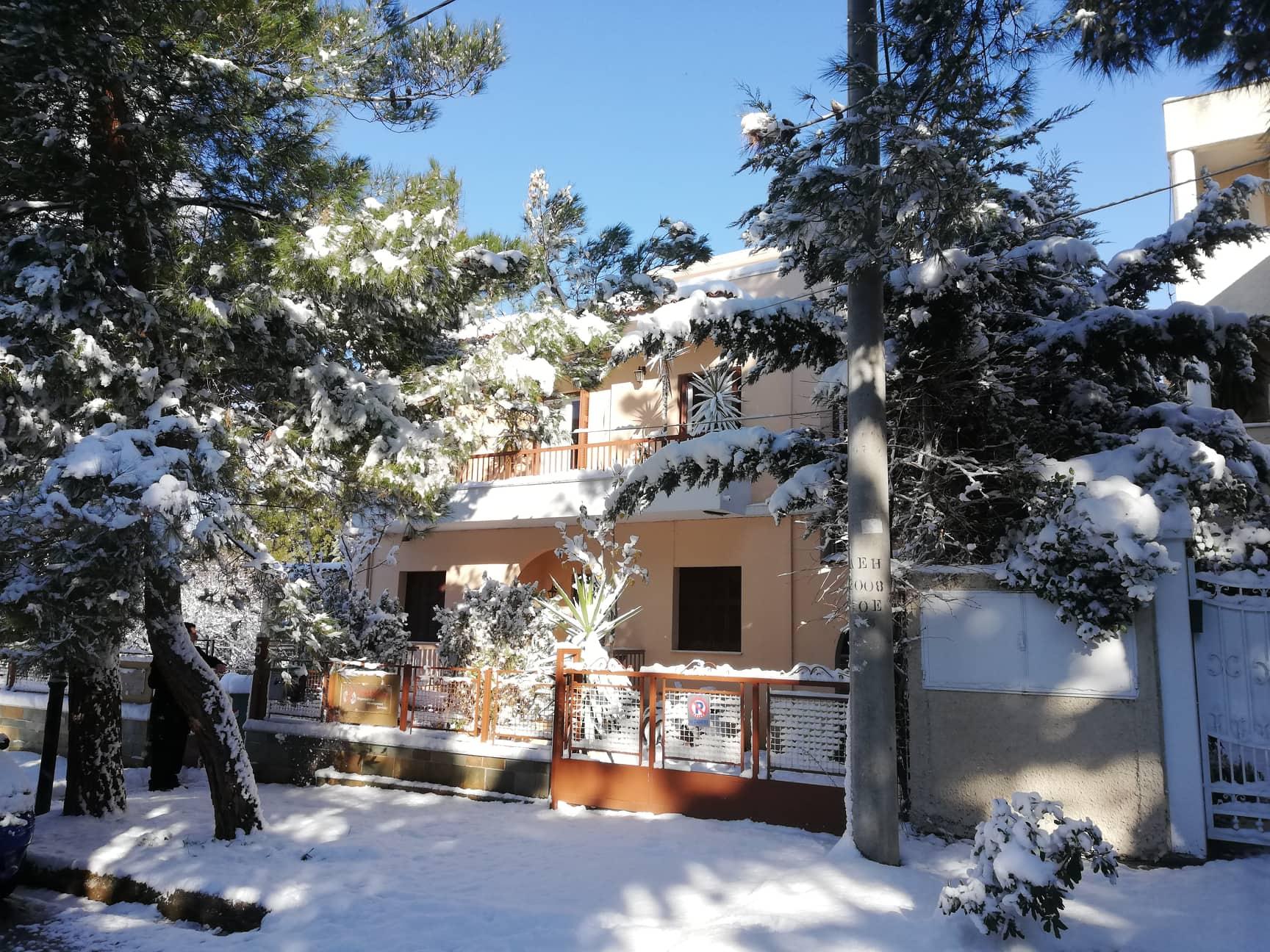 snowy kifissia