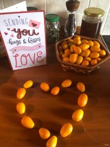 Loving those little kumquats all year long